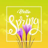 Hello spring. Crocuses Royalty Free Stock Photography