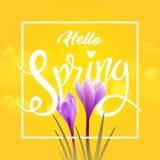 Hello spring. Crocuses Stock Photos