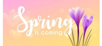 Hello spring. Crocuses Stock Image