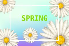 Hello spring, daisies flowers background, cartoon style, vector, illustration, flyer, banner, isolated. Daisies flowers spring background, cartoon style Royalty Free Stock Photography