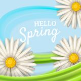Hello spring, daisies flowers background, cartoon style, vector, illustration, flyer, banner, isolated. Daisies flowers spring background, cartoon style Royalty Free Stock Photo