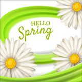 Hello spring, daisies flowers background, cartoon style, vector, illustration, flyer, banner, isolated. Daisies flowers spring background, cartoon style Stock Image