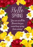 Hello Spring festive banner with Springtime flower. Hello Spring festive banner with Springtime season flower. Floral greeting card for Spring holiday themes Royalty Free Stock Photo