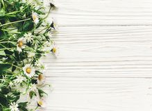 Hello spring flat lay. beautiful daisy flowers with greenery on Royalty Free Stock Photography
