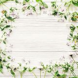 Hello spring flat lay. fresh daisy lilac flowers and green herbs Royalty Free Stock Images
