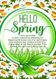 Hello Spring floral frame poster with daisy flower Royalty Free Stock Image