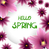 Hello spring frame lillac flower orchid Stock Photography