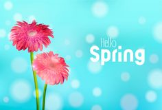 Hello Spring pink daisy flowers greeting card. Hello Spring greeting card illustration with pink daisy flowers and blue sky background. EPS10 vector Royalty Free Stock Photo