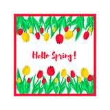 Hello spring greeting card. Spring tulips. Vector illustration stock illustration