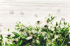 Hello spring image. beautiful daisy  and lilac flowers with gree Royalty Free Stock Photo