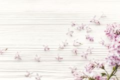 Hello spring image. beautiful tender lilac flowers and petals in Royalty Free Stock Image