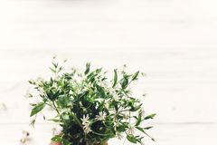 Hello spring image. fresh greens and white little flowers bouque Royalty Free Stock Photo