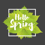 Hello spring. Lettering with hand drawn letters. Label and banner template with green leaves with frame  illustration. Black background Royalty Free Stock Images