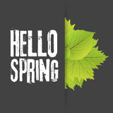 Hello spring. Lettering with hand drawn letters. Label and banner template with green leaves with frame  illustration. Black background Royalty Free Stock Photography