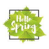 Hello spring. Lettering with hand drawn letters. Label and banner template with green leaves with frame  illustration. White background Stock Photo
