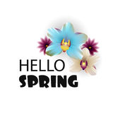 Hello Spring lettering nature flower backdrop Royalty Free Stock Image