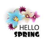 Hello Spring lettering nature orchid backdrop Stock Photos