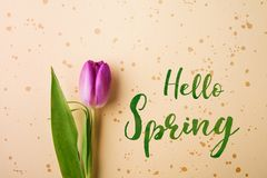 Hello spring phrase and flower flat lay. Stock Images