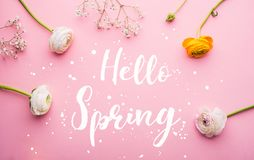 Hello spring phrase and flowers flat lay on a pink bacground. Stock Photo