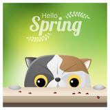 Hello Spring season background with a cat looking at ladybugs. Vector , illustration Stock Photo