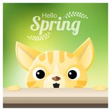 Hello Spring season background with a cat looking at a red ladybug. Vector , illustration Royalty Free Stock Photography