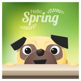 Hello Spring season background with pug dog looking at a red ladybug Royalty Free Stock Image