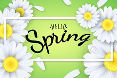 Hello spring. Seasonal poster. Camomiles flowers on a light green background. Text in a frame. Falling petals and drops of water. Royalty Free Stock Photos