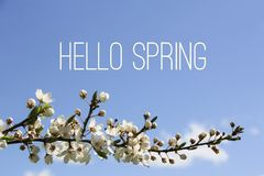 Hello Spring text and blooming tree branch on blue sky background