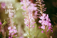 Hello spring text. color flower background. Macro shot. Copyspace for design. Royalty Free Stock Photos