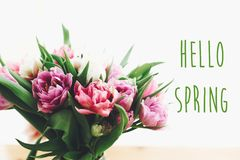 Hello spring text sign on beautiful double peony tulips bouquet in light. Springtime. Stylish floral greeting card. Hello march stock image