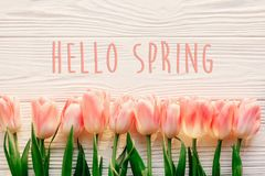 hello spring text sign, beautiful pink tulips on white rustic wooden background flat lay. flowers in soft morning sunlight with s royalty free stock images