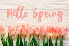 Hello spring text sign, beautiful pink tulips on white rustic wooden background flat lay. flowers in soft morning sunlight with s. Pace for text. greeting card royalty free stock image