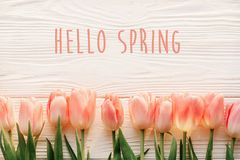 hello spring text sign, beautiful pink tulips on white rustic wooden background flat lay. flowers in soft morning sunlight with s royalty free stock image