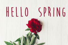 Hello spring text sign on beautiful red peonies blooming on whit Royalty Free Stock Images