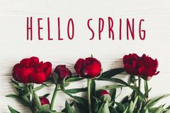 Hello spring text sign on beautiful red peonies blooming on whit Royalty Free Stock Photos