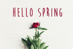 Hello spring text sign on beautiful red peonies blooming on whit Royalty Free Stock Photography