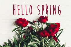 Hello spring text sign on beautiful red peonies blooming on whit Stock Images