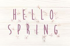 Hello spring text sign on beautiful tender lilac flowers and pet Stock Photo