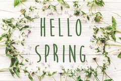 Hello spring text sign on fresh daisy lilac flowers and green he stock photo