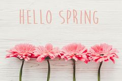 Hello Spring text sign on pink gerbera on white wooden background, flat lay . Stylish floral greeting card royalty free stock images