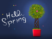 Hello spring from the tree in the pot at night Royalty Free Stock Photography