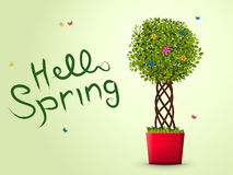 Hello spring with tree in a red pot Royalty Free Stock Images
