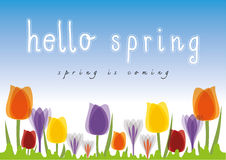 Hello Spring Tulip blue sky background Stock Photos