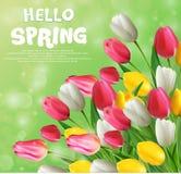 Hello spring with tulip flowers Stock Photos