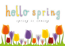 Hello Spring Tulip, Spring is coming Royalty Free Stock Images