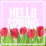 Hello Spring!  Typographic poster design with realistic tulips b. Hello Spring typographic modern poster Stock Photos