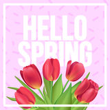 Hello spring typographic poster with red tulips bouquet on pink. Typographic poster design with flowers Royalty Free Stock Photography