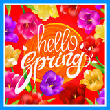 Hello Spring. Vector illustration with bright colorful tulips. A circle orange sun. post card. hand Lettering. red background. Art Stock Photo