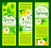 Hello Spring vector springtime flowers banners. Hello Spring vector banners set with blooming daffodils and narcissus blossoms. Springtime holiday design of Stock Photos