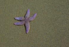 Hello starfish isolated on beach Stock Photos
